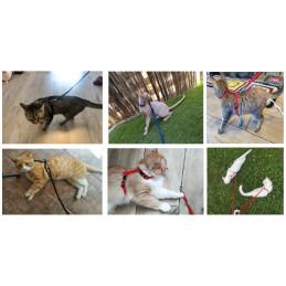 LEKKIE SZELKI Regulowane + SMYCZ dla Psa Kota PETSTORY (Czerwony)