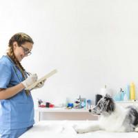 Produkty dla chorujących zwierząt | zoo24.pl