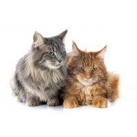 Produkty na chorą wątrobę dla kotów | zoo24.pl